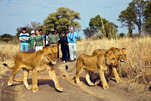 Tauck Tours Safari - Luxury Travel Blog - Luxury Travel Reviews